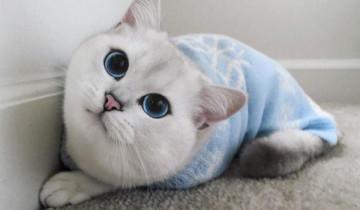 Этот кот мог бы подрабатывать моделью!