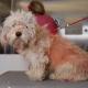 Эту бездомную собаку должны были усыпить. Но удачная стрижка спасла псу жизнь!