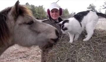 Милый пони объясняется в любви черно-белой кошке. Но как он это делает?!