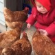 Как маленькие дети реагируют на кур. Самые забавные кадры дня
