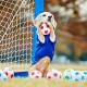 Уникальная собака-голкипер за 60 секунд поймала 14 футбольных мячей