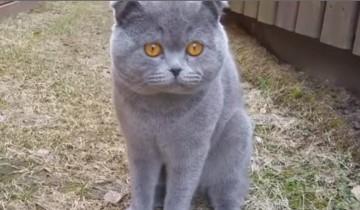 Только послушайте, как этот кот ругается со своей хозяйкой!