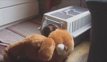 Пес очень любит этого мишку