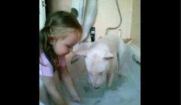 Девочка купает бультерьера. И ему это нравится!