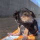 Больного щенка выбросили на помойку, как сложилась его судьба?