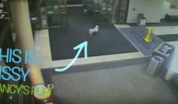 Собачка сама нашла дорогу к больнице, чтобы проведать свою хозяйку!