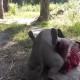 Этот маленький слоненок думает, что он ручной щенок