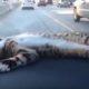 Романтичный котенок любит путешествовать, лежа на приборной панели автомобиля