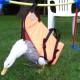 Утка не может ходить, для нее соорудили оригинальное приспособление!