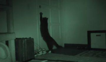 Вы когда-нибудь задумывались над тем, что делает ваша кошка ночью?