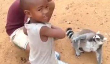 Когда дети перестали чесать спинку этому лемуру, он сделал невероятное!