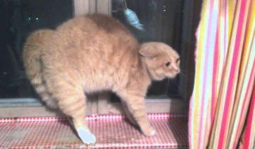 У кота начался приступ истерики. Когда вы узнаете причину, то будете в шоке!