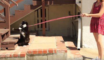 Эти люди впервые идут со своими котами на прогулку. Что из этого вышло?