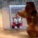 Эта женщина стала живой игрушкой для медведя гризли. Вот это развлечение!