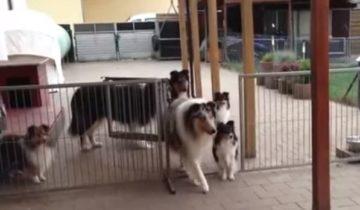 Эти собаки послушно ждут, когда их пригласят к ужину