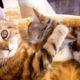 Вот, что значит «кошачьи нежности»