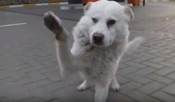 Самая благодарная собака в мире растрогала миллионы сердец