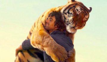 Тигр пришел приласкаться