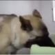 Хозяин прощается со своей собакой, которую через 5 минут должны усыпить!