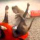 Девочка делает колесо. Когда вы увидите реакцию собаки, то умрете со смеха!