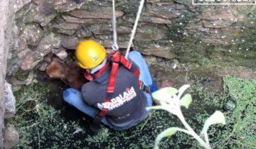 Собака упала в глубокий колодец. Посмотрите, как она встречает своих спасителей!
