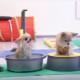 Милые чихуахуа показывают забавные трюки!