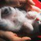 Маленькие котята засыпают в ладонях у своих хозяев