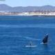 Человек катался на лодке, и тут перед ним вынырнул кит!