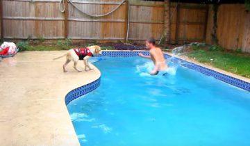 Золотистый ретривер учится плавать
