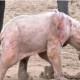 Когда посетители увидели этого слоненка, они были в шоке!