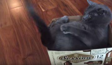 За что этот кот так возненавидел свой хвост?