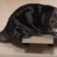 Кот, который предпочитает маленькие коробки