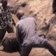 Они вытащили слоненка из болота. Как отреагировала на это мама слониха?