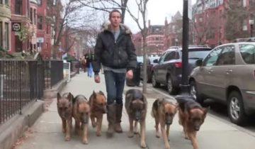 Этот человек выгуливает собак. То, как он это делает, просто невероятно!