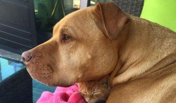 Спасенная собака всю жизнь ждала, чтобы позаботиться о котенке