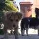 Хозяин выбросил трех собак на улицу. Их ждет очень печальная участь