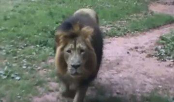 Животные в зоопарке нападают на людей
