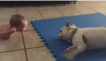 Милая собака забавляет ребенка
