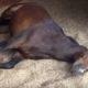 Это видео про лошадей удивит даже самых бывалых конюхов!