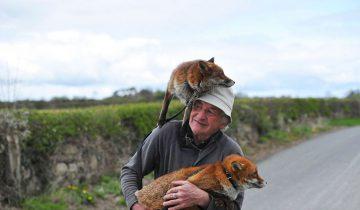 Этот человек стал настоящим папой для двух щенков лисы!