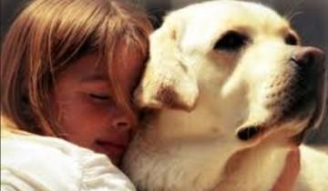 Вы только посмотрите, как собаки спасают ребенка от разъяренной матери