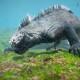 Морская игуана обожает водоросли. Уникальные кадры из подводных глубин Галапагоссов!