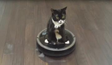 Эта кошка любит кататься на роботе-пылесосе. Когда вы узнаете почему, то не поверите!