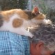 Эта кошка точно знает, что нужно ее хозяину