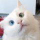 Самая необыкновенная кошка в мире обладает магическим взглядом!