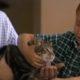 Кошка спасает мальчика от бешеной собаки. Это невероятно!