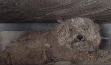 Когда владелец собаки умер, ее выбросили на улицу