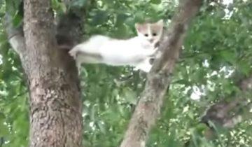 Этот котенок не может слезть с дерева. Посмотрите, что будет делать его мама!
