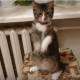Котик готов на все, лишь бы получить кусочек мяска