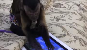 Животные, которые балдеют от планшетов